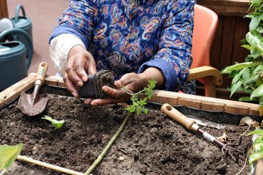 Belles_Plantes_2.jpg
